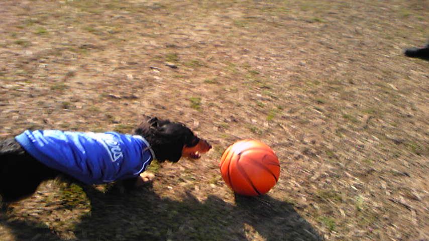サッカー犬でした♪